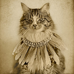 cat wearing a feather necklace