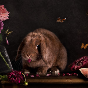 Rabbit destroying a still life scene